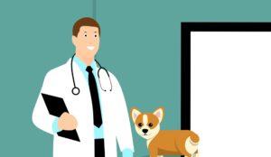 動物薬剤師として働くメリット・デメリット